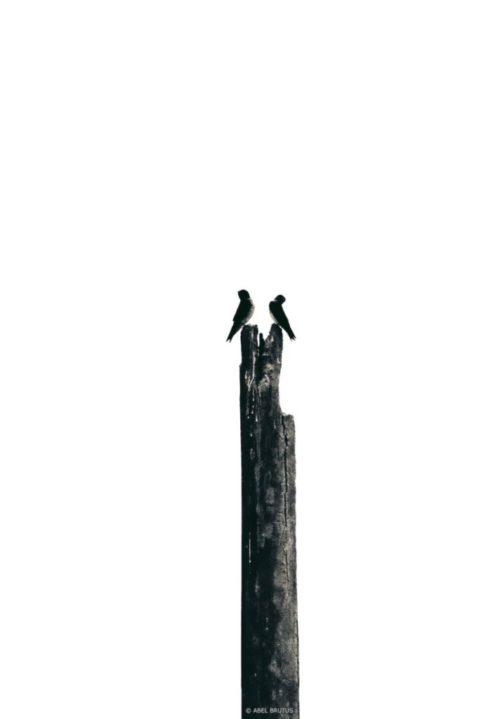 """""""moi non plus ..."""" . 2009 . Nature Series"""